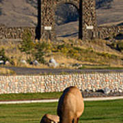 Elk At Yellowstone Entrance Poster