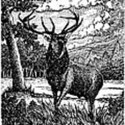 Elk From Glass Poster