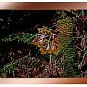 Elwha Leaf Poster