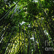 Enchanted Forest Haleakala National Park Poster