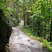 Enduring Path Poster