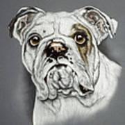 English Bulldog Poster