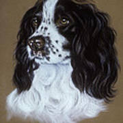 English Cocker Spaniel Poster by Patricia Ivy