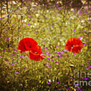 English Summer Meadow. Poster