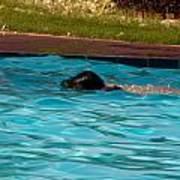 Enjoying A Swim Poster