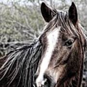 Equine Trance Poster