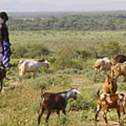Ethiopia-south Tribal Goat Herder Poster