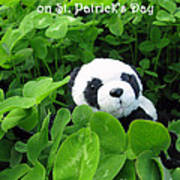 Even Pandas Are Irish On St. Patrick's Day Poster