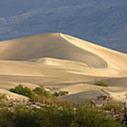 Evening Dune Poster