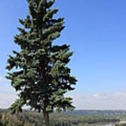 Evergreen Tree Beside The River Poster