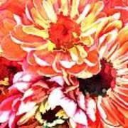 Explosion Of Bright Zinnias Poster