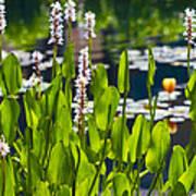 Fabulous Water Hyacinth  Poster