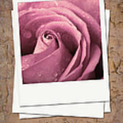 Faded Rose Photo Poster