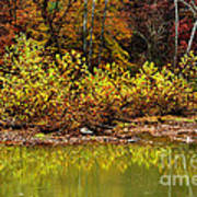 Fall Along West Fork River Poster