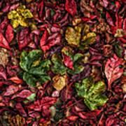 Fall Autumn Leaves Poster by John Farnan