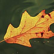 Fall Away Poster