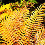 Fall Color Cinnamon Fern Poster