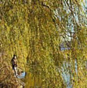 Fall Fisherman Poster