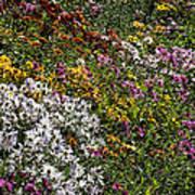 Fall Flower Garden Poster