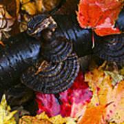 Fall Fungi Poster