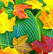 Fall Hosta Poster