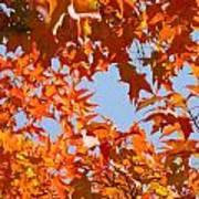 Fall Leaves Art Prints Autumn Red Orange Leaves Blue Sky Poster