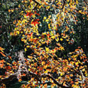 Fall Leaves Over Florida Pond Poster