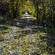 Fall On Macomb Orchard Trail Poster