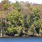 Fall On The Suwannee River Poster