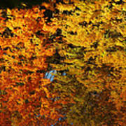 Fall Textures In Water Poster by LeeAnn McLaneGoetz McLaneGoetzStudioLLCcom