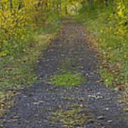 Fall Trail Scene 30  Poster