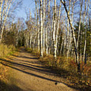 Fall Trail Scene 35 B Poster