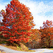 Fall Tree By The Road Poster