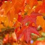 Fall Tree Leaves Art Prints Orange Red Autumn Poster