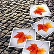 Fallen Autumn  Prints Poster