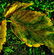 Fallen Elm Leaves Poster