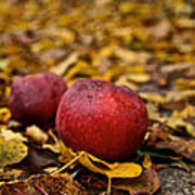 Fallen Fruit Poster