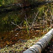 Fallen Tree Path Poster