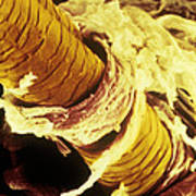 False-col Sem Of Surface Of Human Skin Poster