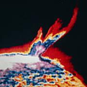 False-colour Skylab Image Of A Solar Prominence Poster