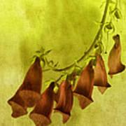 Fancy Foxglove Poster by Bonnie Bruno