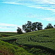 Farm Fields Poster