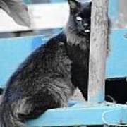 Farm Kitty On Blue Wagon Poster