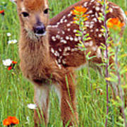 Fawn In Flowers Poster
