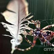 Feather And Spider Poster