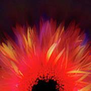 Feathered Floral Poster by Li   van Saathoff