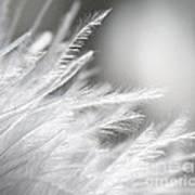 Feathery White Poster