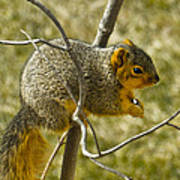 Feeding Tree Squirrel Poster
