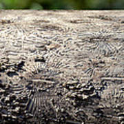 Fell By The Mighty Bark Beetle Poster