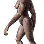 Female Australopithecus Africanus Poster
